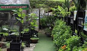 種菜不需要買地 大樓屋頂變身退休農場