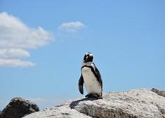 企鵝屍體胃內有口罩.....15億只口罩流入海洋