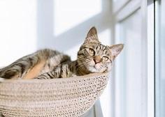 「入侵種」製成貓便所-大學生設計「銀合歡貓砂」