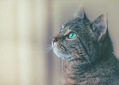 挺挺動物-不只愛貓狗,挺動物你該知道的事