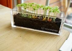 紙會長出植物!名片不只是名片,埋進土裡會發芽