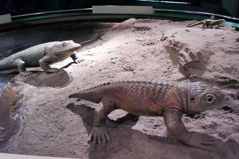魚石螈(左)與西蒙螈(右)