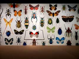 昆蟲美照牆
