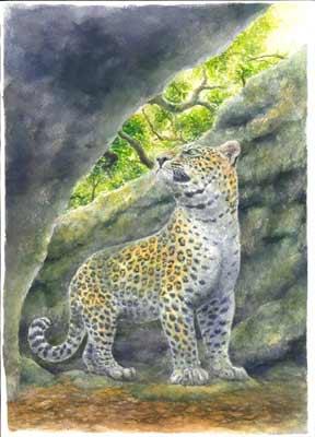 花豹生態復原圖,由李建興繪製