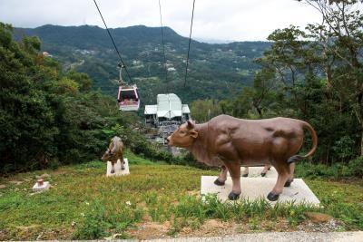 指南宮廟方特請人將陳陽春彩筆下的牛隻做成雕塑,搭乘 貓纜俯瞰,彷彿栩栩如生。(莊坤儒攝)