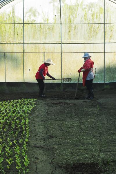 依據栽種計劃,培育當季菜蔬。