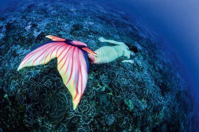 為了阻擋深澳電廠建立,王銘祥邀請美人魚遊歷「玫瑰珊瑚園」的特殊奇觀,盼更多人一同守護海底生態。