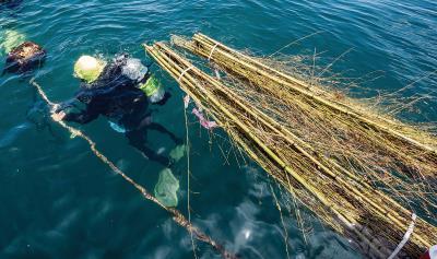 王銘祥下海,預備將桂竹叢拉到24公尺深的海底。 (林旻萱攝)
