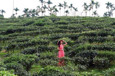 印度拍攝團隊前往日月潭和?森林的紅茶園取景。(Creation公司提供)