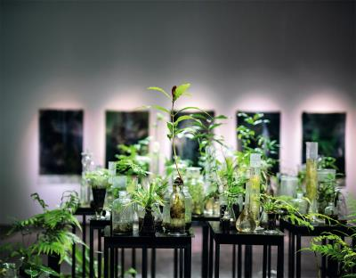 台灣本地的植物,經過藝術家珍奈特•勞倫斯重新陳列、布置,展現出詩意的魅力。(林旻萱攝)