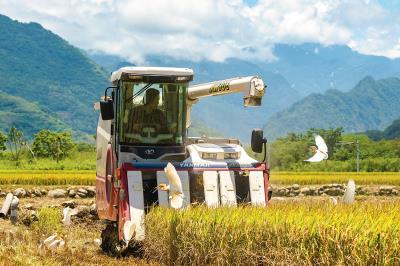 用友善的方式耕耘土地,土地所給的回饋是稻米的豐收。