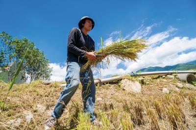 原本是逃離家鄉的農村子弟魏瑞廷,返家後用科技等專業,將自家稻米行銷國際。(林旻萱攝)
