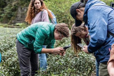 台大為Minerva Schools舉辦的工作坊 「從土地到手裡的台灣茶」,帶領學生到 坪林茶園觀察。(台灣大學國際事務處提供)