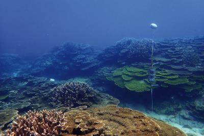 澎葉生收集生態環境音,在澎湖東吉嶼水下錄音。